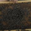 prodej oddělků včelařství sedlákovi