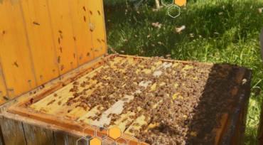 Přijímáme objednávky oddělků a včelstev pro rok 2021.